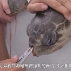 保護海洋生態  為了海龜拒用塑膠吸管