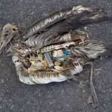 海洋危機系列二:塑膠是有毒的定時炸彈